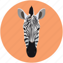 face zebra, forest animal, zebra, zebra face icon