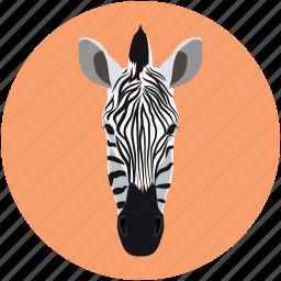 face zebra, forest animal, zebra, zebra face icon