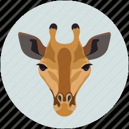 animal face, herbivore, jungle, mammals icon