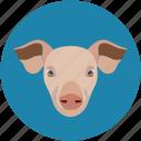 pig, pig face, piggy, pork