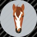 herbivore, horse, mammals, safari, zebra icon