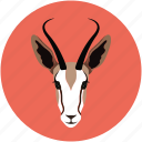 cabra, goat, goat baby, goat face icon
