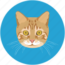 cat, head, kitty, pet, pussycat, veterinary icon