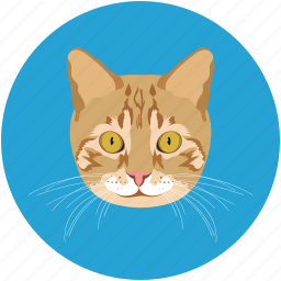 cat, head, kitty, pet, pussycat, veterinary icon
