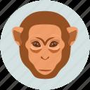 forest monkey, monkey, monkey face, smile icon