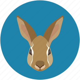 bunny, cute, hare, pet, rabbit, wildlife icon