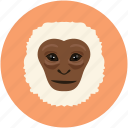 animal face, monkey, monkey face, smile icon