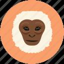 animal face, smile, monkey, monkey face