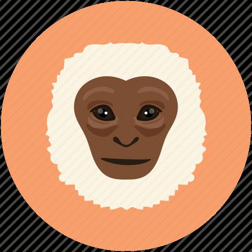 animal face, monkey, monkey face, smile icon