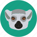 forest, fox, grid, jungle, mammal, omnivore icon