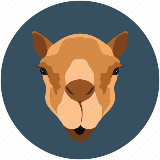 camel, camel face, forest, indian camel, nature, zoo icon