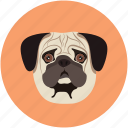 animal face, animal forest, bulldog, bulldog face, dog, pet icon