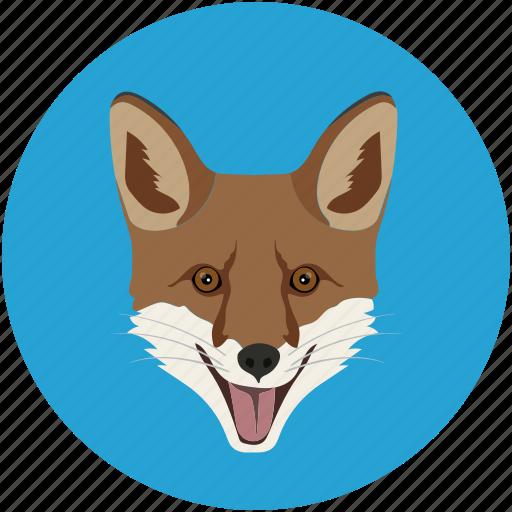 banking, fox, grid, jhingo, mammal, omnivore icon