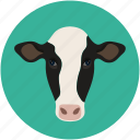 animal face, cow, farm pet