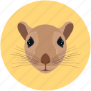 animal face, rodent, rat, animal, mouse