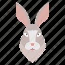animal, face, pet, rabbit