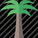 palmtree, travel, tree, tropical, vacation