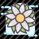 decorative flower, flower, flower design, generic flower, tropical flower icon