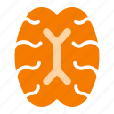 brain, human, intelligent, nerve, organ icon