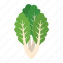 cook, food, green, kitchen, lettuce, vegetable, veggie icon