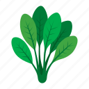 cook, food, green, kitchen, spinach, vegetable, veggie icon