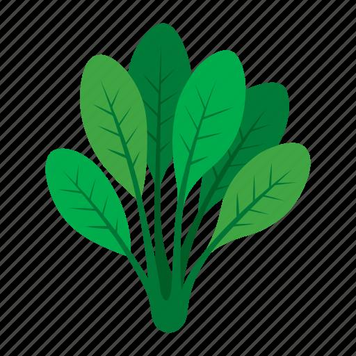 cook, food, green, kitchen, spinach, vegetable, veggie icon