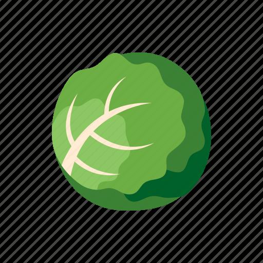 cabbage, cook, food, kitchen, lettuce, vegetable, veggie icon