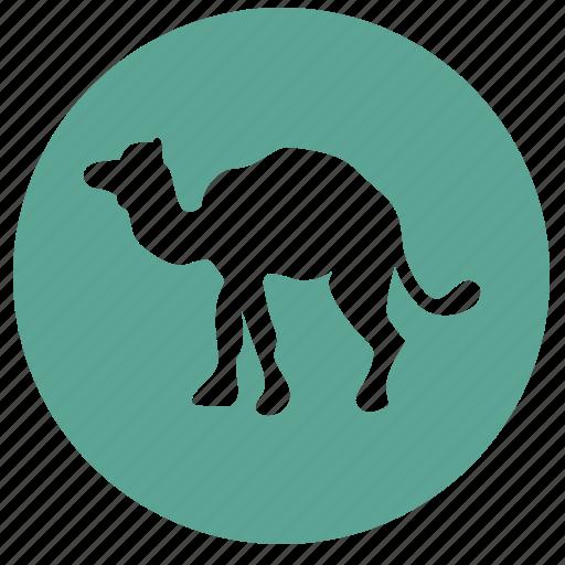 camel, culture, egypt, round, tourism icon
