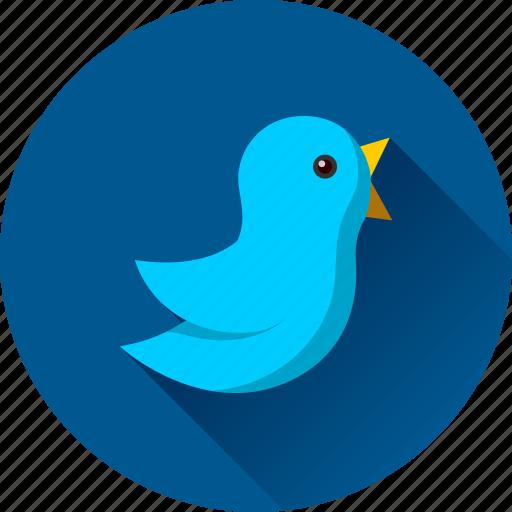 bird, tweet, tweeting, twitter icon
