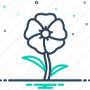 alcea rosea, althaea, blooming, botanical, flower, hollyhock, malvaceae