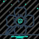 blooming, calophyllaceae, cobra saffron, flower, ironwood, mesua ferrea, natural icon