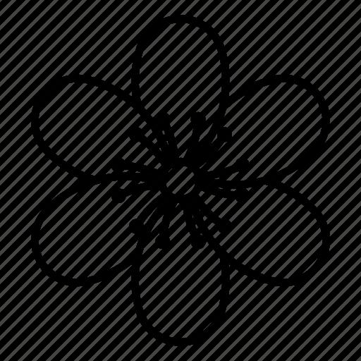 blossom, flower, hepatica, nature, spring icon