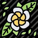 blossom, decoration, frangipani, petal, plumeria icon