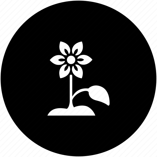 flower, herbal, plant, product icon