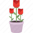 flowers, blossom, flower, garden, gardening, rose, spring