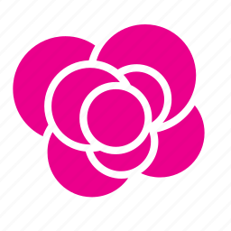 abstract, bloom, flower, garden, nature, rose icon