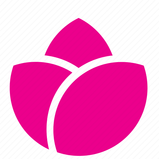 abstract, bloom, floral, flower, garden, nature, rose icon
