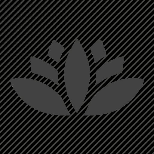 flower, lotus, nature, spa, wellness icon