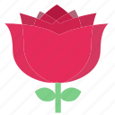 floral, flowers, garden flowers, garden plants, pink flower, pink rose, plants icon