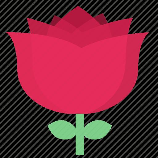 floral, flowers, garden flowers, garden plants, pink flower, pink rose, plants icon