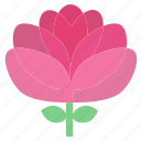 floral, flowers, garden, garden flowers, garden plants, pink flower, plants icon