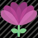 floral, flowers, garden, garden flowers, garden plants, plants, violet flower icon