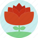 floral, flowers, garden flowers, garden plants, orange flower, plants, red flower icon