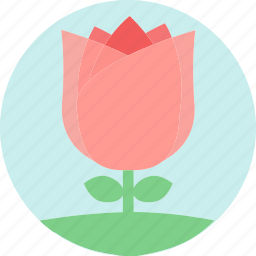 floral, flowers, garden plants, pink flower, pink rose, plants, rose icon