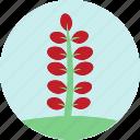 flowers, garden, garden plants, leaves, plants, red flower, red leaves icon