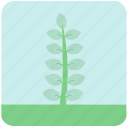 blue flowers, blue leaves, flowers, garden, garden plants, leaves, plants icon