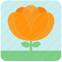 floral, flowers, garden, garden flowers, garden plants, orange flower, plants icon