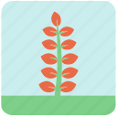 flowers, garden, garden plants, leaves, orange flower, orange leaves, plants icon