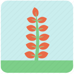 flowers, garden, garden plants, leaves, orange flower, orange leaves, plants icon