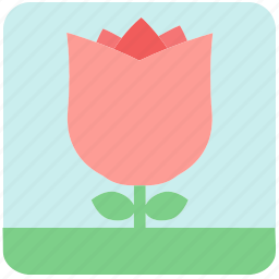 floral, flowers, garden flowers, pink flower, pink rose, plants, rose icon